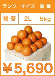 タンカン 贈答用 2lサイズ 5kg