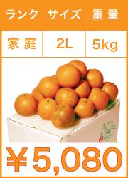タンカン 家庭用 2Lサイズ 5kg